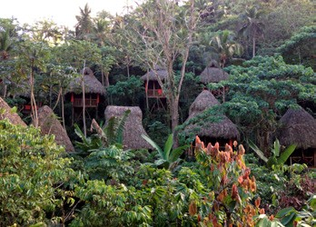 Dominican Republic Tree House
