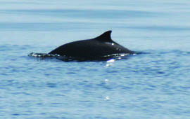 NOAA's New Northeast Chief's first official act – Undermining the Marine Mammal Protection Act?