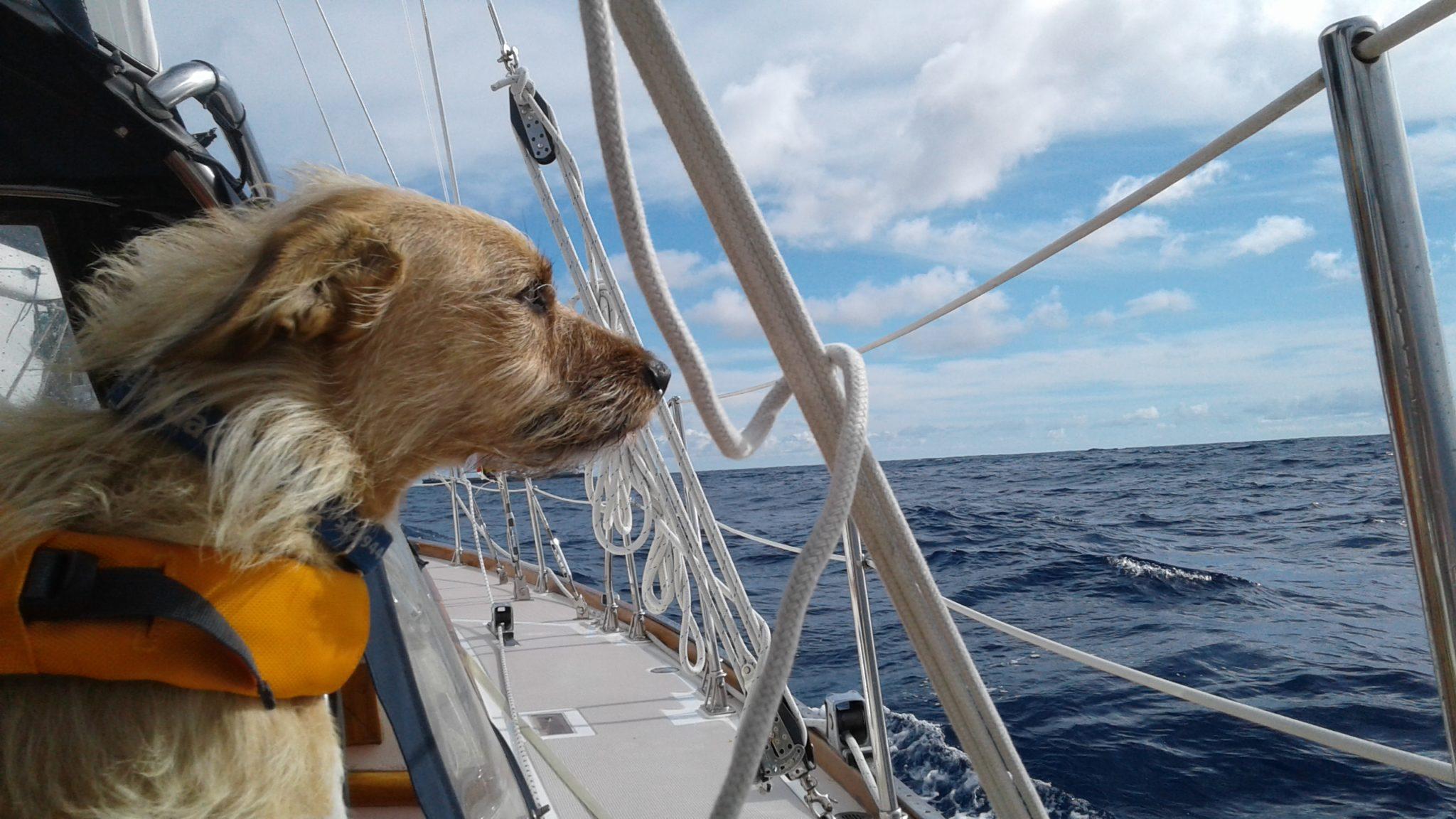 Salty Dawg Sailing Association™ Announces Summer Rallies to Maine and Nova Scotia
