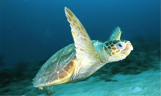 Saving Sea Turtles: Tactics from an Aquatic Vet