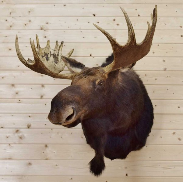 "79th ""Moosehead Awards"" Presented Virtually. Furtive RC Group's ceremony posted online moose-teriously."