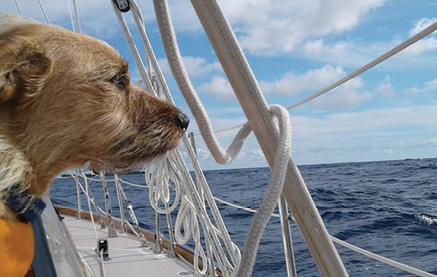 Salty Dawg Sailing Association Announces 2021 Rallies